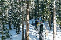 Winter Walk&Talk - Pārgājiens un Angļu Sarunvaloda Svaigā Gaisā!